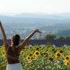 Sunflower 180 007