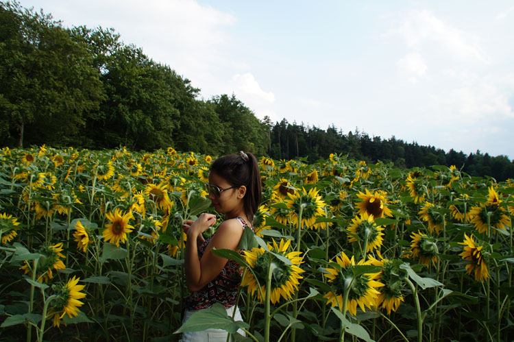 sunflower_180_006