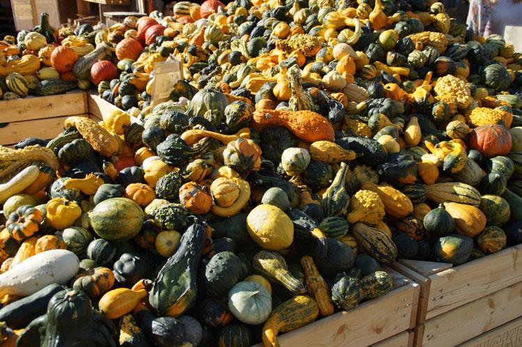 pumpkin_189_005