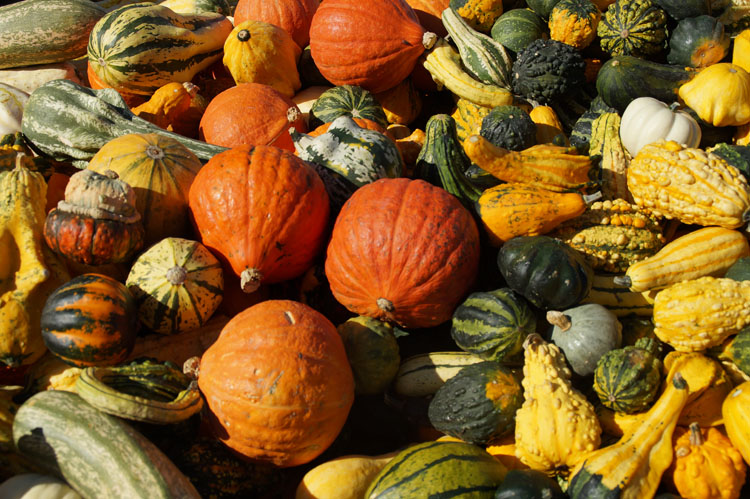 pumpkin_189_007