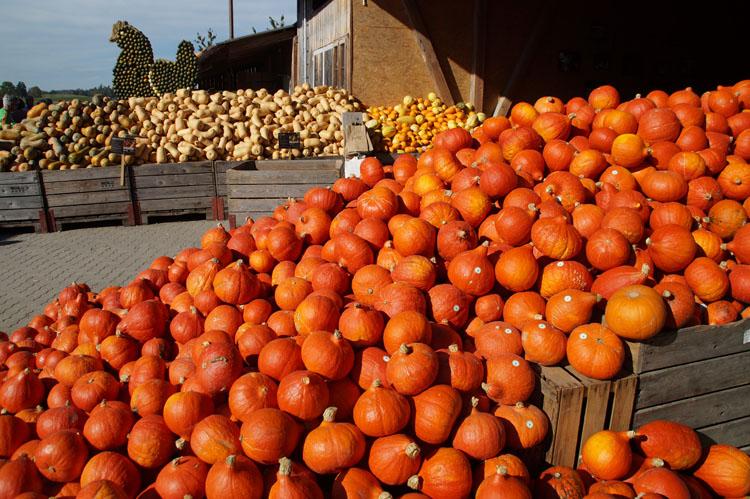 pumpkin_189_015