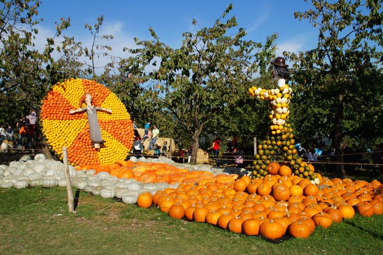 pumpkin_189_033