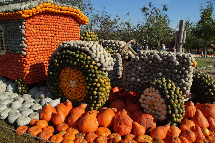 pumpkin_189_036