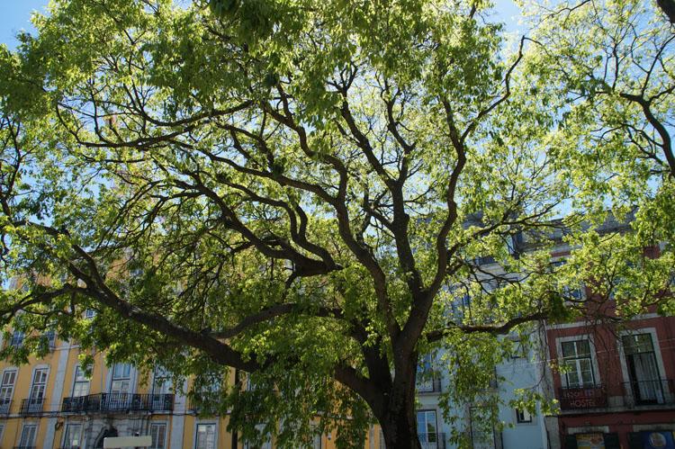 Lisbon_221_028